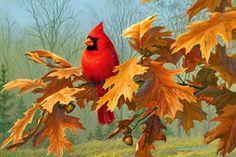 Cardinal on autumn branch