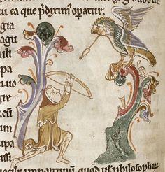 A hunter shoots an arrow into a jay in a tree. Bodleian Library, MS. Bodley 602, Folio 64v