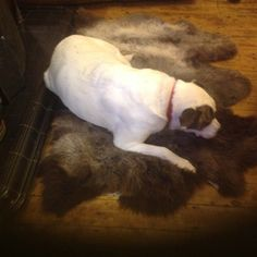 He is a rescue dog and is now 12 years old so likes a bit of comfort! Here he is, happily resting in front of the fire on Helen's new Herdwick treble sheepskin. Rescue Dogs, Meet, Fans, Animals, Animales, Animaux, Animal, Animais