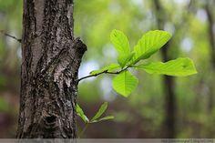 ZAKER Plant Leaves, Plants, Photos, Pictures, Flora, Plant, Planting, Cake Smash Pictures
