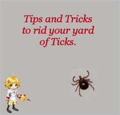 How to Get Rid of Ticks around your Yard -  http://thegardeningcook.com/get-rid-of-ticks-in-your-yard/