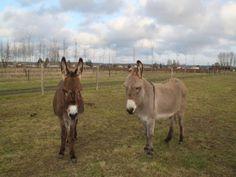 A la découverte des ânes, j'offre: http://www.web-commercant.fr/cheques/loisirs/restigne-37140/les-vignes-roses/2085-a-la-decouverte-des-anes