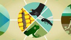 Servicios ecosistémicos, viral producido por el Instituto de Investigación de Recursos Biológicos Alexander von Humboldt Colombia