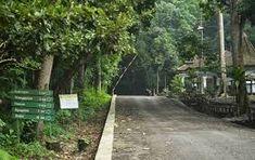 """Taman Nasional Alas Purwo adalah taman nasional yang terletak di Kecamatan Tegaldlimo dan Kecamatan Purwoharjo, Kabupaten Banyuwangi, Jawa Timur, Indonesia. Secara geografis terletak di ujung tenggara Pulau Jawa wilayah pantai selatan antara 8°26'45""""–8°47'00"""" LS dan 114°20'16""""–114°36'00"""" BT. Goa, Sidewalk, Tours, Plants, Side Walkway, Walkway, Plant, Orphan, Walkways"""