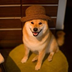 """<b><a href=""""http://web.stagram.com/n/marutaro/"""" target=""""_blank"""">Maru Taro</a> is a four-year-old Shiba-Inu living in Japan who happens to have almost 50,000 followers on Instagram.</b> Hey, if you were this cute, your feed would be popular too."""