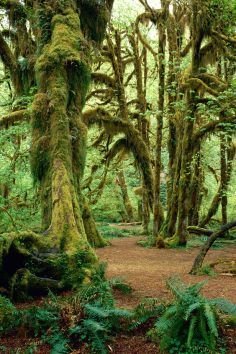 Hoh Rain Forest in the Olympic National Park - a unique scenic experience