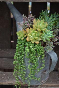 Een metalen gieter gevuld met vetplanten.
