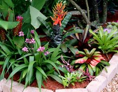 bromeliad garden:all different types of bromeliads