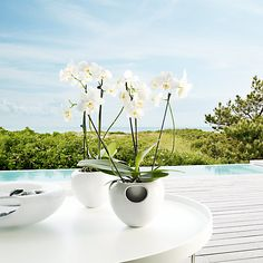 Orchids In Water, Self Watering Pots, Orchid Pot, Orchid Care, Scandinavian Design, Garden Furniture, Gardening Tips, Planting Flowers, Different Colors
