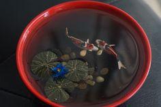 Miniature koi pond with 2 koi fish and lotus flower