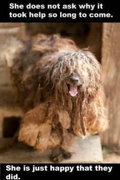 More than 50 dogs are receiving medical attention after a bust at a suspected puppy mill in Rutherford County. Rescue Dogs, Animal Rescue, Animal Pictures, Cool Pictures, Rutherford County, Living In North Carolina, Buy Puppies, Animal Protection, Puppy Mills