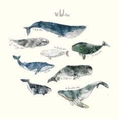 Whales Duvet Cover by Amy Hamilton | Society6