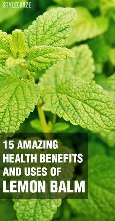 15 Amazing Health Benefits And Uses Of Lemon Balm