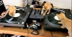 DJs.    (KO) Sweet kittens at play.