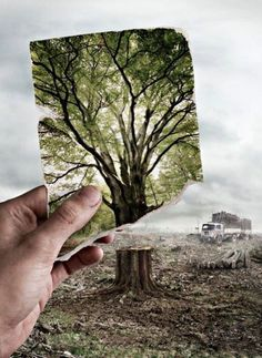 This photomontage makes you want to go out and save the environment by planting trees because this image makes you feel sad. The image of the destroyed wasteland in the background of the beautiful bright picture makes you wish the images were reversed. Save Our Earth, Save The Planet, Our Planet Earth, Photomontage, Yoga Kunst, Art Environnemental, Montage Photo, Environmental Art, Environmental Degradation