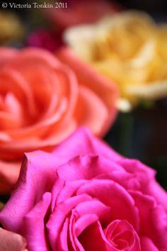 Pretty #flowers