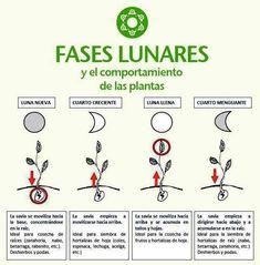 Fases lunares para la siembra y recolección de plantas o frutos