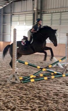 IMG 2612 — Postimage.org Hunter Jumper, India, Camera Accessories, Show Horses, Horse Riding, Original Image, Digital Camera, Cute Pictures, Equestrian