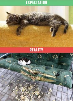 Life with a Cat Expectations vs Reality (11 pics + 4 gifs) | Funny All The Time