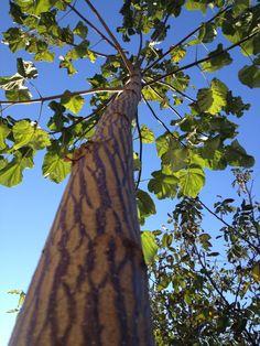 Happy tree by Sima Loredana