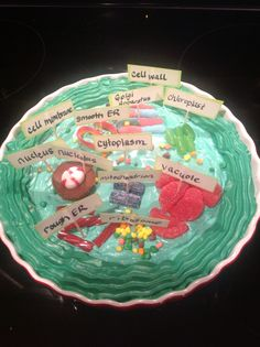 Theron's 5th grade science- edible cookie plant cell