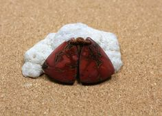 Red Creek Jasper Earring Pair Red Pink and Brown by ABOSBeads