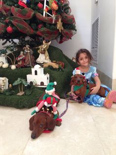 Doxies christmas