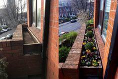 Recent Work - Grounds Maintenance - Balcony Planter