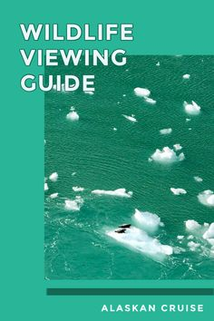 If you're hoping to increase your chances of seeing bears, whales, eagles, and many of the other wild animals Alaska has, you've come to the right place. Here are my tips for wildlife watching on an Alaskan Cruise. Alaska Travel, Canada Travel, Travel Usa, Travel Guides, Travel Tips, Travel Articles, Cruise Travel, Cruise Tips, Alaskan Cruise