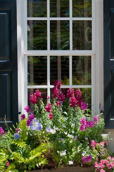 Window box with snapdragon, viola and calibrachoa against black shutter by Georgianna Lane