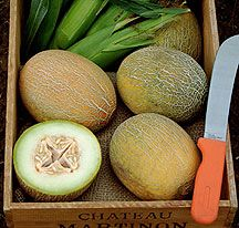 Variety Spotlight – Organic Melons and Watermelons