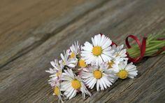 La marguerite, fleur de l'innocence...
