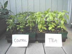 The Benefits Of Using Worm Tea On Your Plants...