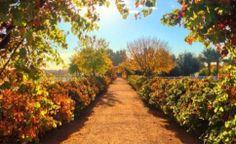 Great photo of #Agritopia in #GilbertAZ taken by @dandyman20 using Instagram.