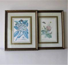 2 Vintage Framed Botanical Prints Curtis Wildflower Book