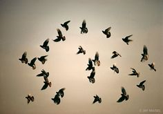 Jay Maisel  Flock of Birds New York
