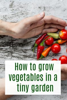 Simple tips to help you grow veggies in a tiny garden - a small home can still have a great vegetable gardening you just need good ardening hacks to help you maximise the space #garden #home  #vegetables #abeautifulspace Growing Beans, Growing Veggies, Frugal Family, Family Meals, Vegetable Gardening, Gardening Tips, Insect Repellent Plants, Vertical Planting, Companion Gardening