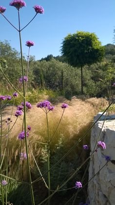 wild grasses and verbena