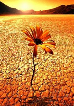 "This picture is worth a thousand words... This flower is ""me"" pushing up through the dry land."