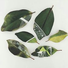"""""""Making patterns, with paint pens, on drying magnolia leaves, with my 7 year old. Deco Nature, Painted Leaves, Painting On Leaves, Magnolia Leaves, Leaf Crafts, Paint Pens, Nature Crafts, Art Plastique, Rock Art"""