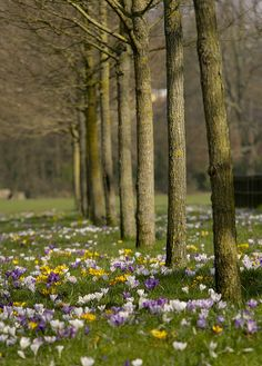 Tree Line..(explored no147) | Flickr - Photo Sharing!