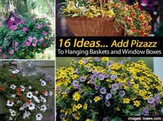 16 Ideas – Add Pizazz To Hanging Baskets and Window Boxes