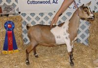 Nigerian Dwarf Goat Association, resources for goat keepers
