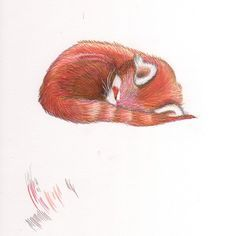Sleeping red panda print.