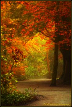 A Path Through A Magical Forest