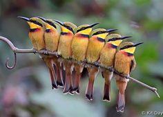Aves Acurrucadas