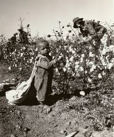 Delta cotton pickers near McGehee, Arkansas, (to magnify, click on the photo by Billie Seamans)