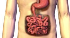 AUTOIMMUNE DISEASE – THE GUT CONNECTION: Autoimmune disease is a pathological disease resulting from a disordered immune reaction in which antibodies are produced against the person's own tissues. Healthy Diet Tips, Autoimmune Disease, Medical Conditions, Weight Loss Tips, Body Care, Health And Beauty, Health Tips, Health Fitness, Nutrition