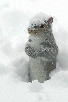 Excuse me, Is Spring coming soon? I need to know when my nuts will thaw out!