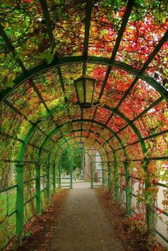 Beautiful garden tunnel  Would love to try something like this.
